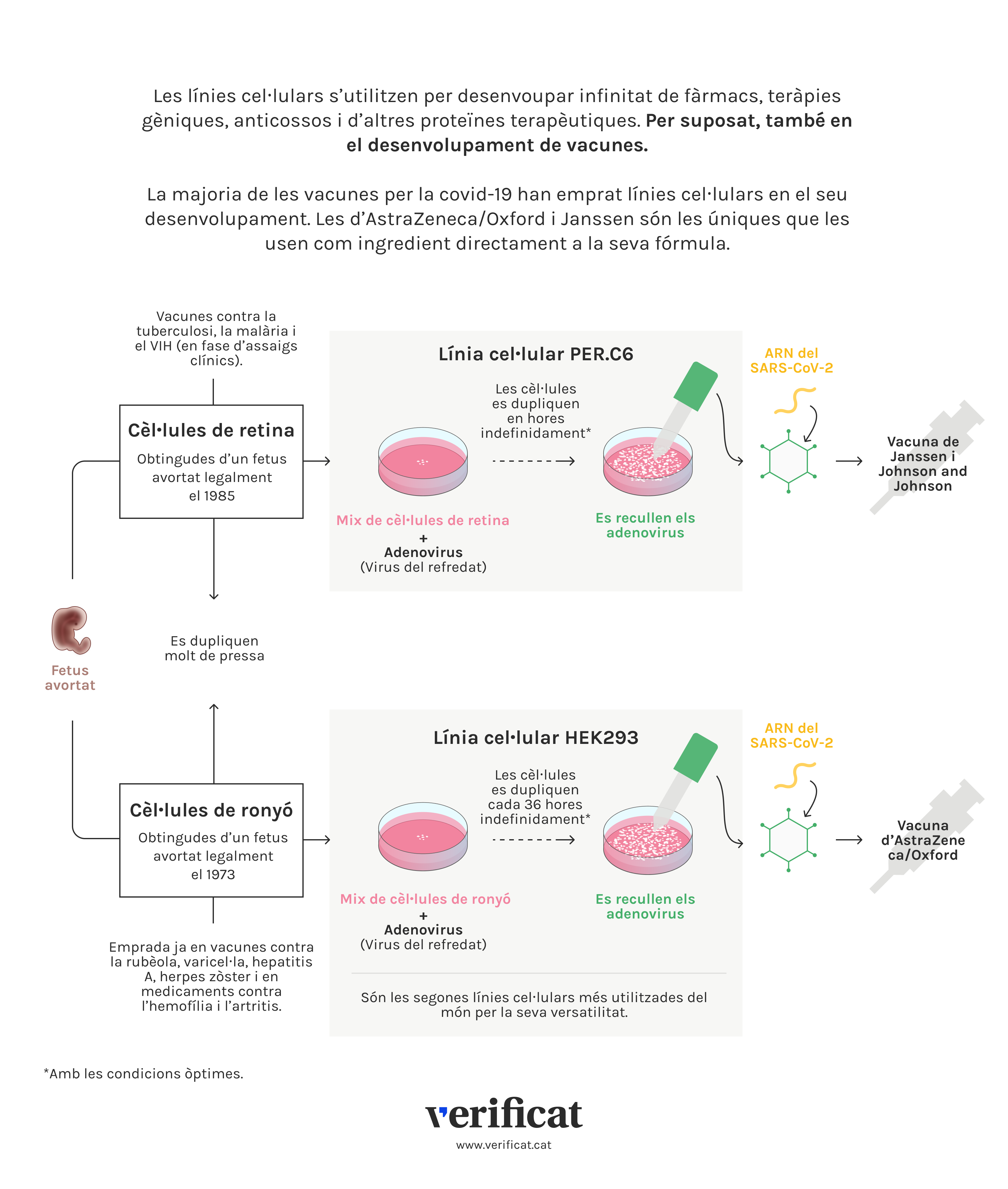 Infografia que explica les línies cel·lulars