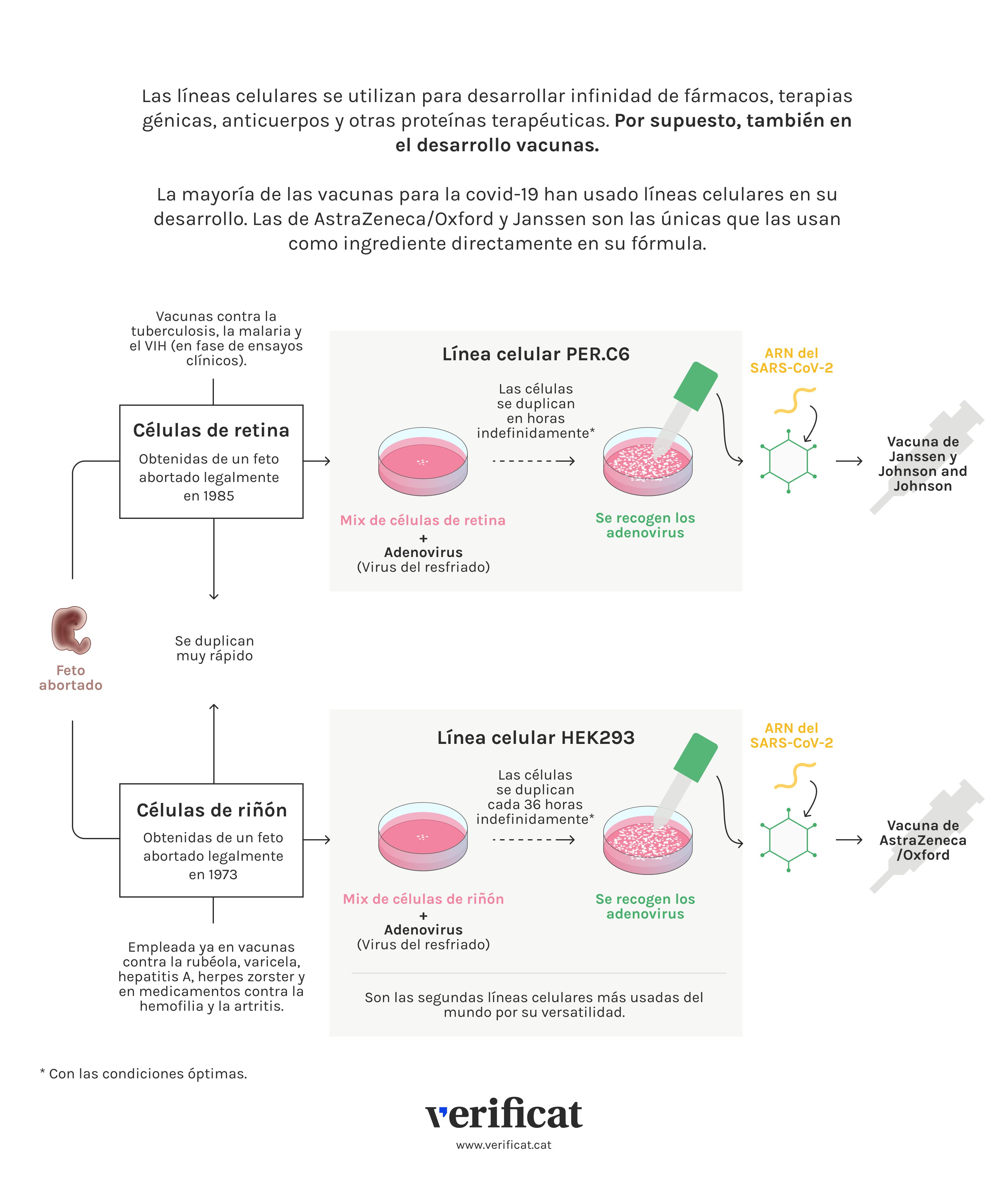 Infografía que explica las líneas celulares