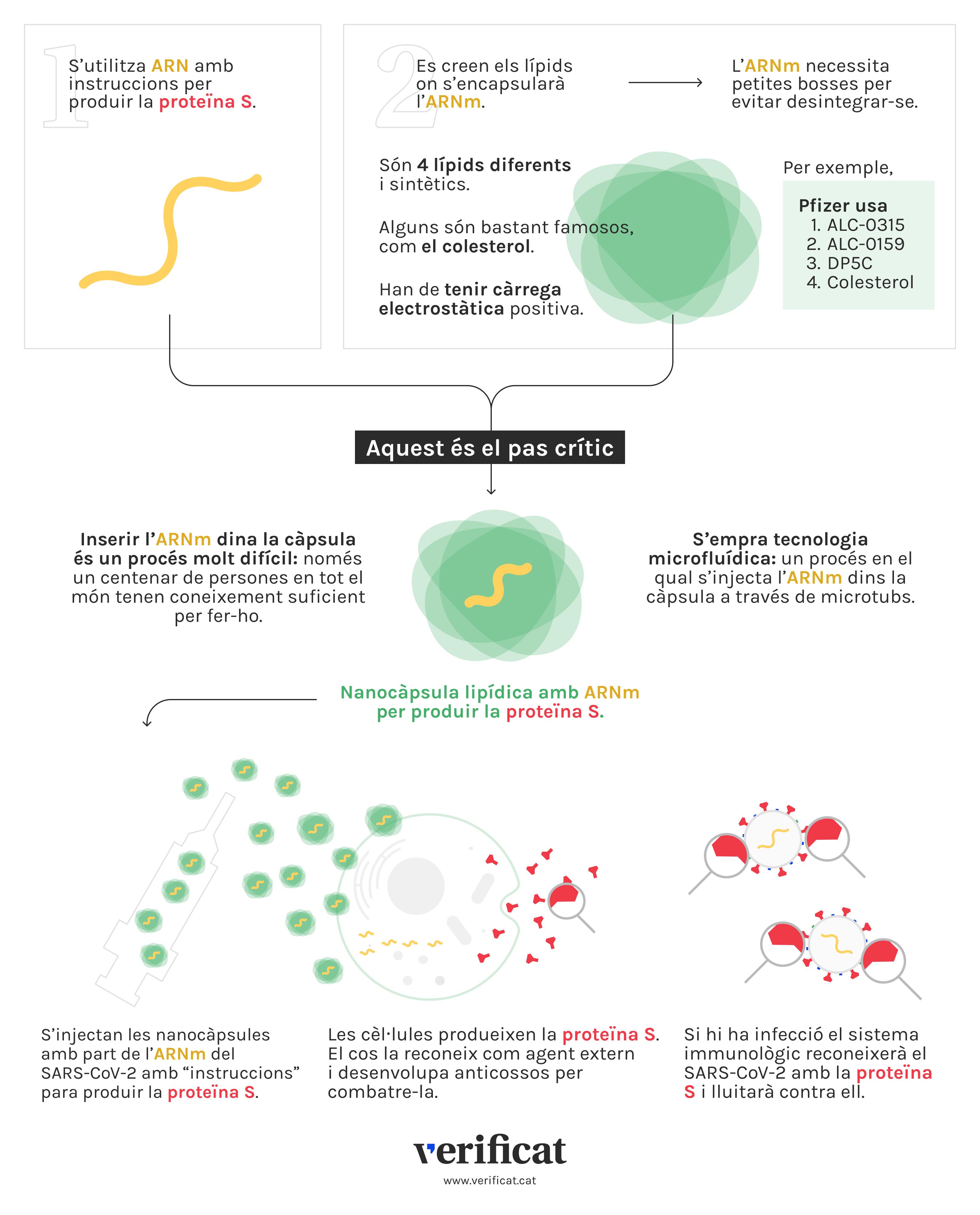Infografia que explica el funcionament de les vacunes d'ARNm